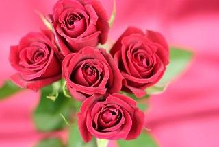 無料 夢占い バラ 薔薇の意味