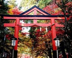 紅葉の名所!滋賀県おすすめパワースポット 日吉大社
